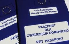 Paszporty dla psów i kotów