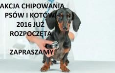 Akcja chipowania psów i kotów Jaworzno 2016 Zapraszamy. Zaczipuj swojego psa kota psy koty  Promocyjne czipowanie cena promocja chip chipowanie pies psa kot kota przychodnia weterynaryjna
